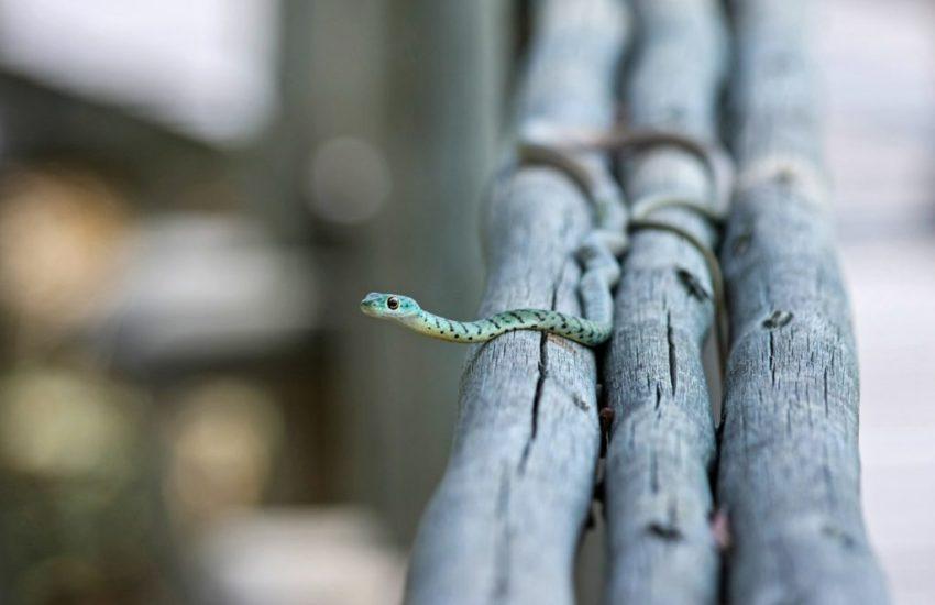 snake-516507_1920